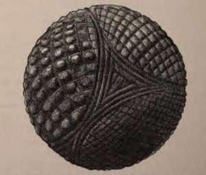 Stone petrosphere